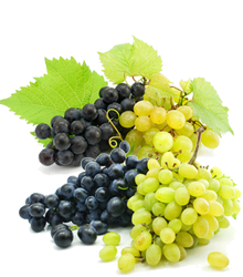 greek grapes